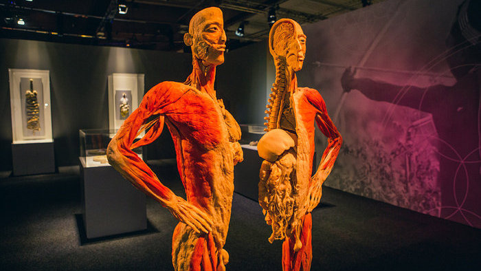 Exponát z výstavy Body The Exhibition.
